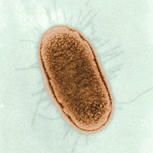Coriander Oil kills food borne organisms.