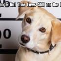 31 Strange But True Laws Still On The Books