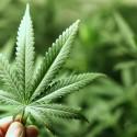 California Just Legalized Recreational Marijuana, But Don't Smoke Up Yet….