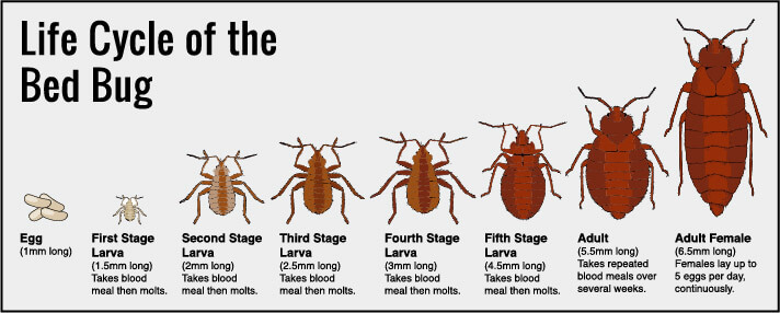 Suing Over Bed Bugs - What You Need to Know | The Reeves Law