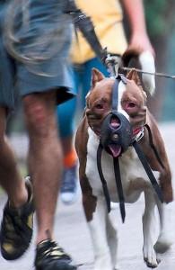 Deadly Concord Dog Attack