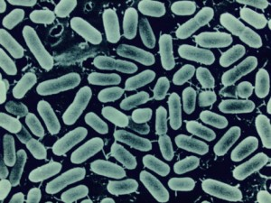 Listeria poisoning