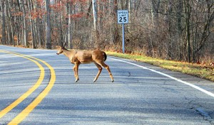 Animals Present a Danger to California Drivers
