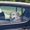Don't Leave the Family Dog in your Car: Here's What the Law Says!