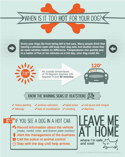 Do not leave dogs in hot cars - Infographic