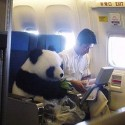 Pigs & Poultry on Airplanes: the Law of Emotional Support Animals